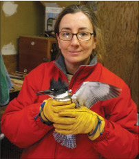 Catherine with a Belted Kingfisher who flew into a window