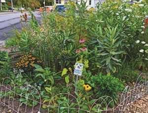 Mascoma River Greenway Pollinator Garden