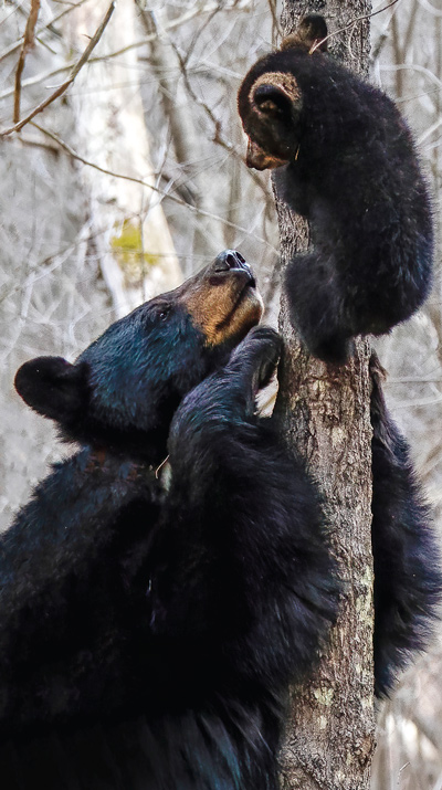Mink the bear and one of her cubs